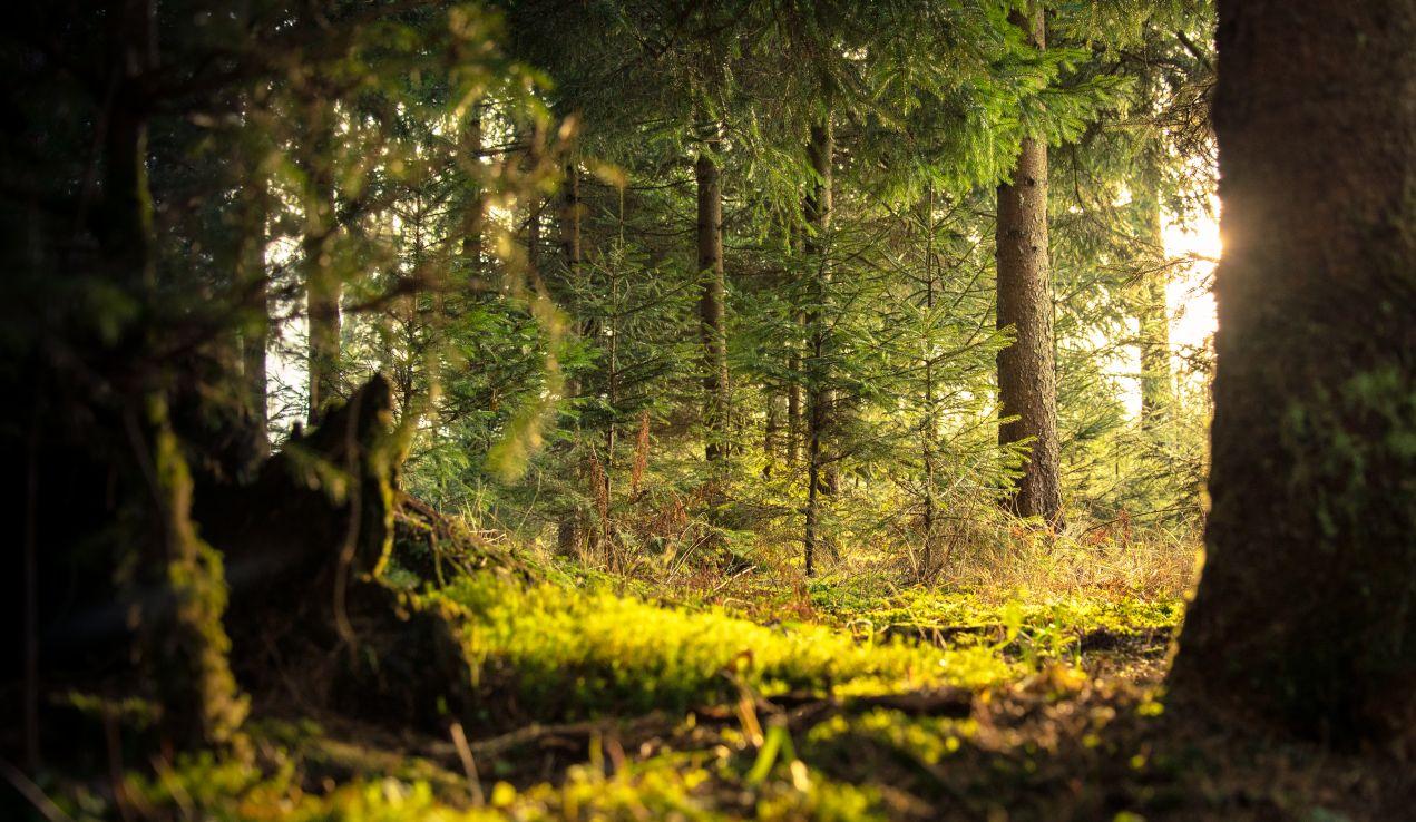 Design Hotel Tyrol Lässt Seine Gäste Im Wald Baden Zaronews